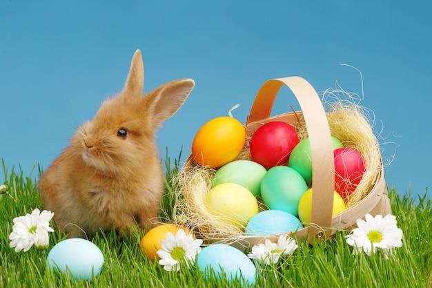 飾られた卵のバスケットの小さなウサギ。イースターの休日の概念。