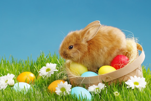 Маленький кролик в корзине с украшенными яйцами. концепция праздника пасхи.