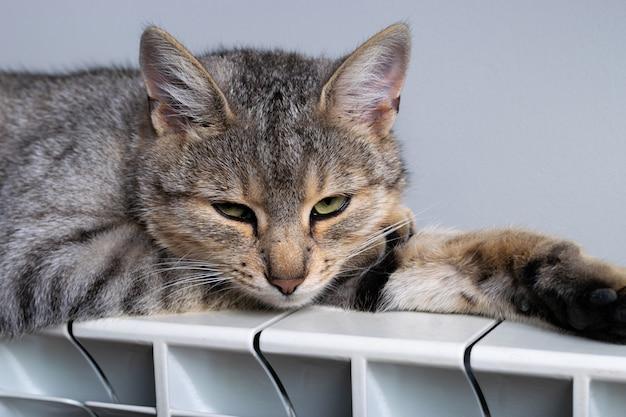 Кот-тигр отдыхает на теплом радиаторе