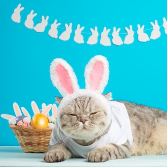 Пасхальная кошка с ушками зайчика с пасхальными яйцами. милый котенок