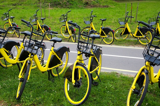 Прокат желтых велосипедов. много желтых велосипедов стоят на зеленой траве