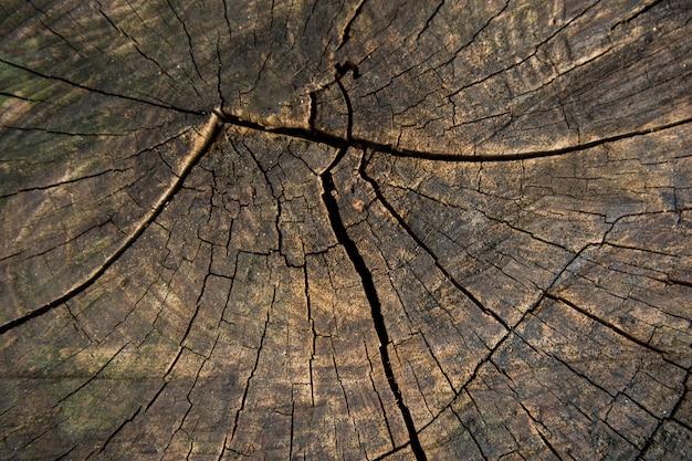 木の幹の切り株テクスチャ背景のトップビュー