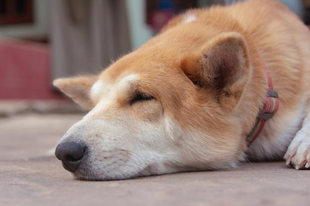 Спящие коричневые собаки на цементном полу.