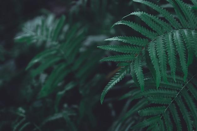 緑のシダの葉のパターンの背景。シダは、自然の濃い緑色のトーンの背景を残します。