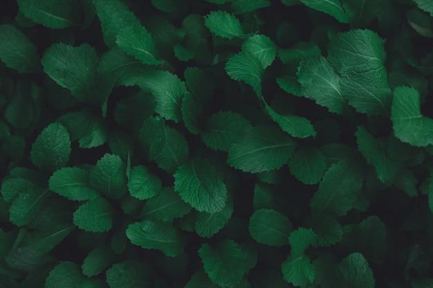 緑の葉のパターンの背景。平置き。自然ダークグリーントーンの背景色