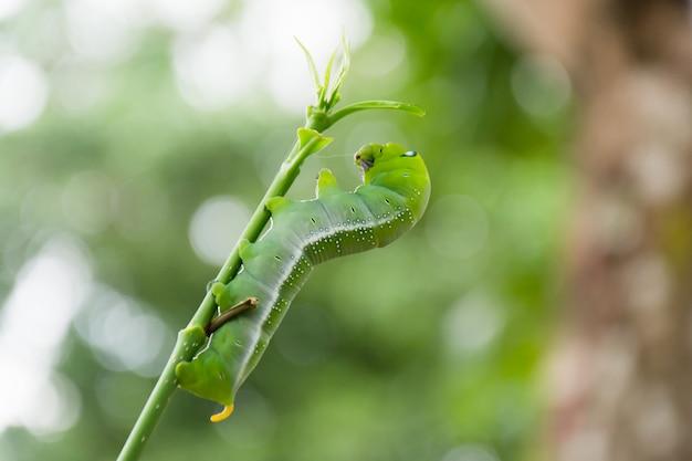 毛虫の緑を食べる