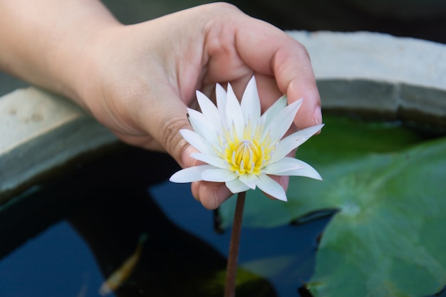 女性の手の中の睡蓮の花