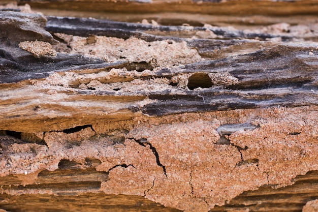 シロアリの痕跡は木を食べる