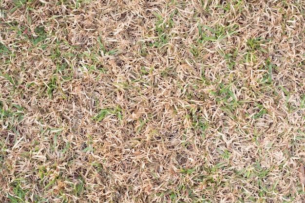 背景として乾いた草。