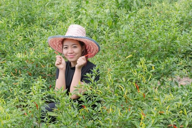 農業分野で唐辛子を拾う女性農家