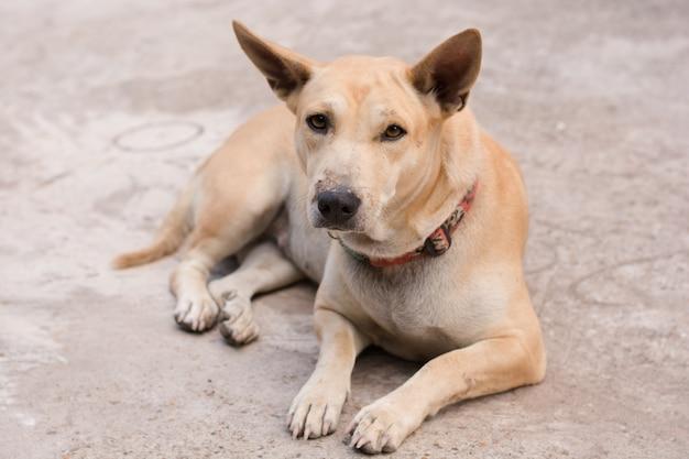 Собака сидит на бетонном полу