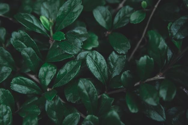 Зеленые листья фон.