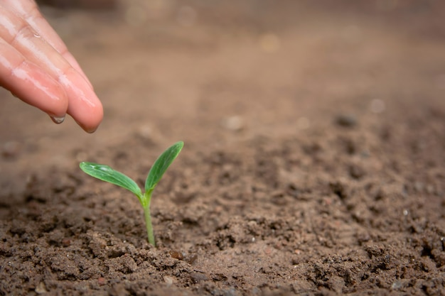Рука полива зеленый росток растет из почвы с копией пространства