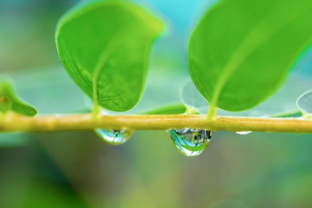 木の枝の水滴。