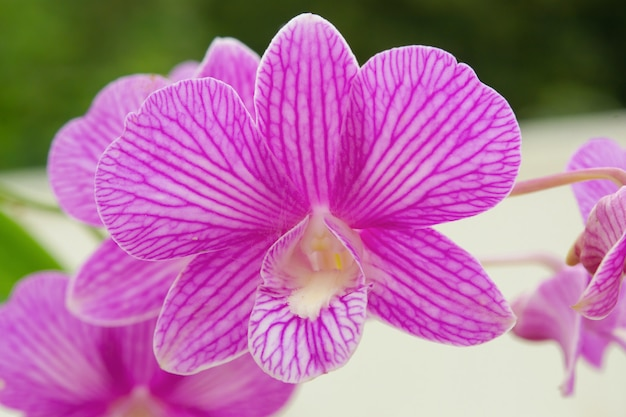 胡蝶蘭紫色の蘭の花