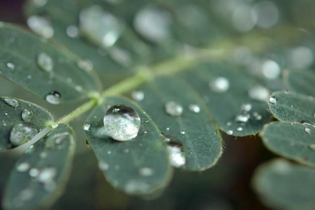 緑の葉に水滴。