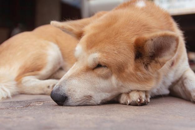 セメントの床で眠っている茶色の犬。