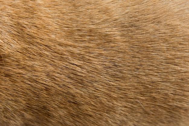 クローズアップ茶色の犬の毛皮の背景