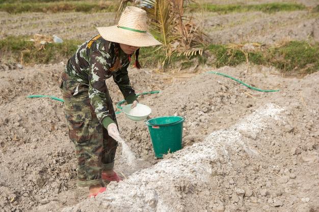女性庭師は、石灰または水酸化カルシウムを土壌に入れて、土壌の酸性度を中和します。
