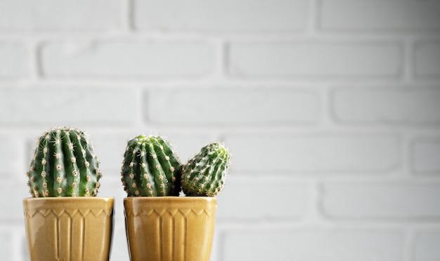 装飾的なサボテン、多肉植物の鉢植えのミニマルな家の装飾
