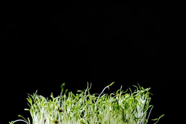 黒い背景に種子の若い芽のヒープ