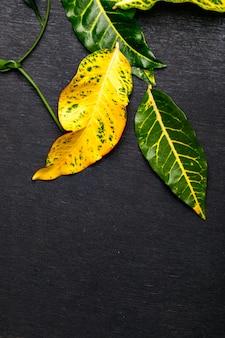 Зеленые листья на темном фоне с копией пространства