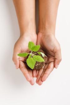 Женская рука держит небольшое растение на белом фоне