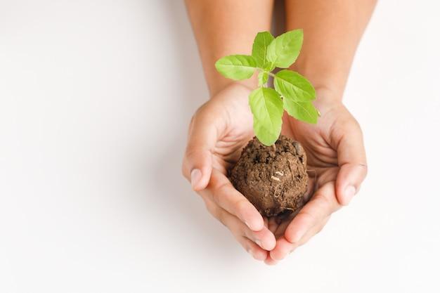 白い背景の上の小さな植物を持っている女性の手