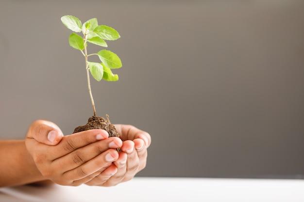 黒の背景に小さな植物を持っている女性の手