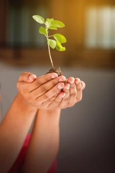 Женская рука держит небольшое растение на черном фоне