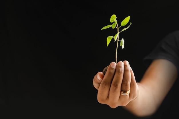 黒の背景に小さな植物を持っている男性の手
