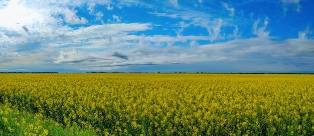 ウクライナの春の畑に菜種の花