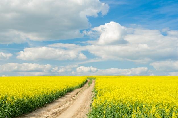 晴れた日にラップフィールドを通る道路