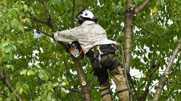 Рабочий со шлемом работает на высоте среди деревьев. альпинист на белой стене. лесник срезает ветки бензопилой и бросает на землю. дровосек работает с бензопилой.