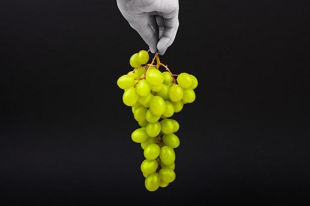 黒の背景に緑のブドウ。手は黒い背景に空中でブドウを保持します。体積ワイナリー。緑のブッシュブドウの房。