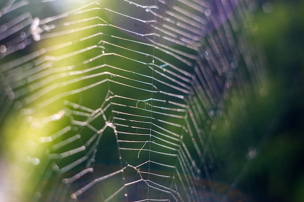 自然、クモの巣のクローズアップ