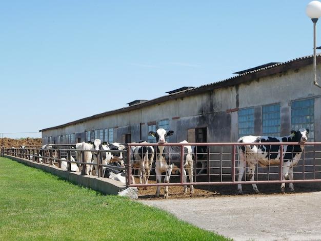 農場のフェンスの後ろに牛
