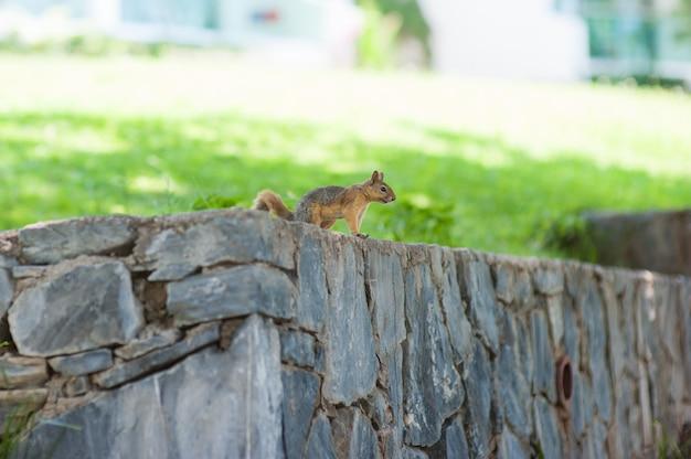 Белка сидит на стене и смотрит вдаль