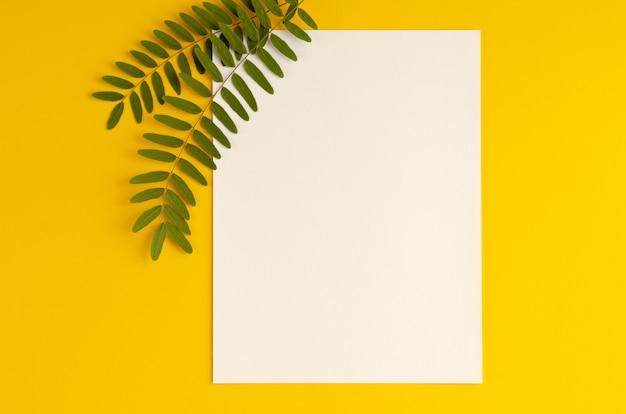 緑の葉、アカシアの枝、黄色の背景にホワイトペーパーの組成。