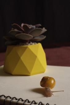 リンゴとノートの近くの小さなカタツムリとテーブルの上の黄色のコンクリートポットの多肉植物。