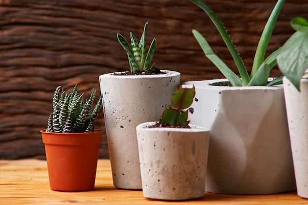 コンクリートポット、創造的な家の装飾の緑の植物。木製の背景に