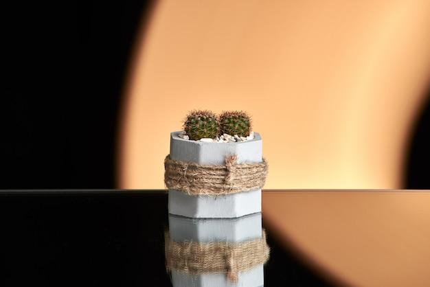多肉植物、オレンジ色の明るい背景にコンクリートポットの中のサボテン。きれいな写真