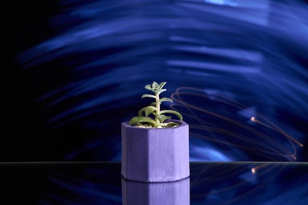 青い明るい背景に紫のコンクリートポットの多肉植物。きれいな写真