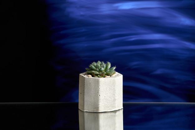 青い光の背景にコンクリートポットの多肉植物。きれいな写真