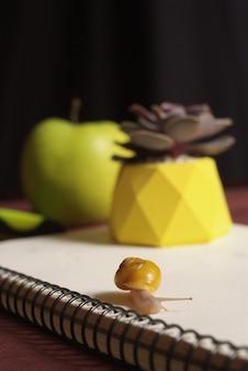 リンゴとノートブックの近くの小さなカタツムリとテーブルの上の黄色のコンクリートポットの多肉植物。マクロをクローズアップ