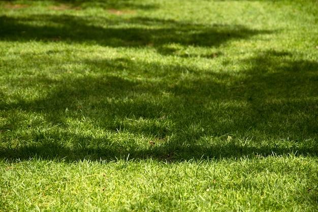 美しい新鮮な緑の芝生の光と影