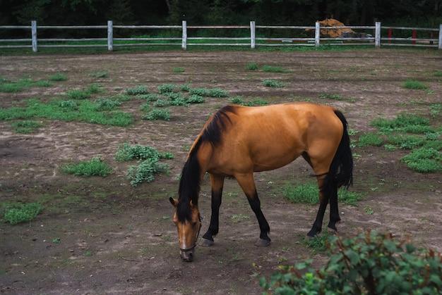 Красивая коричневая лошадь в зоопарке, на поле. летний день