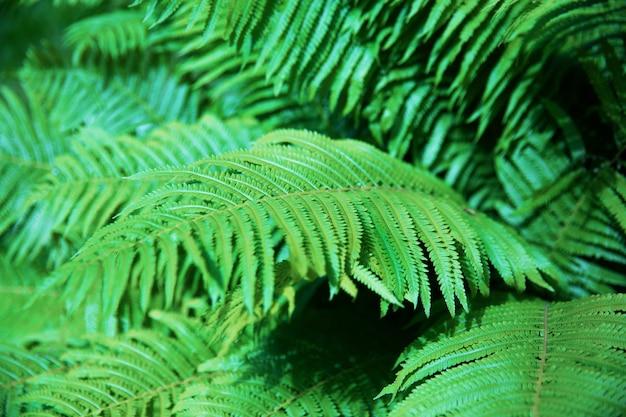 Красивый папоротник оставляет зеленую листву