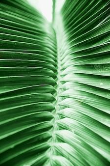 Красивый тропический зеленый большой лист пальмы.