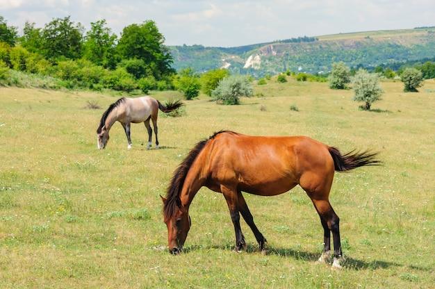 赤い馬の牧草地で放牧